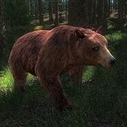 Bear cinnamon