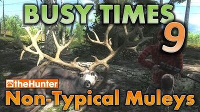TheHunter Busy Times 9 - Non-Typical Muleys