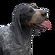Bluetick coonhound dark female