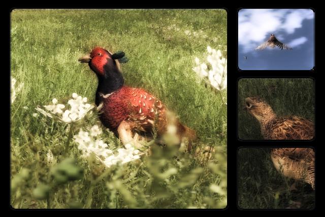 File:Species pheasant 700.png