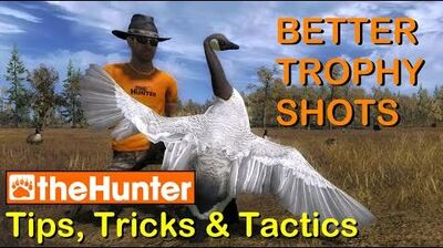 TheHunter Tips, Tricks & Tactics - BETTER TROPHY SHOTS