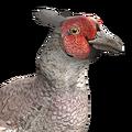 [CONCLUSA] Competizioni Ufficiali theHunterItaly - Fly Like a Pheasant - Fagiano 120?cb=20160304142448