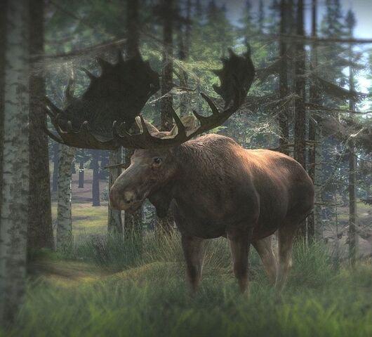 File:Moose2.jpg