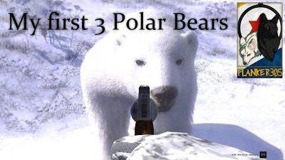 My first 3 Polar Bears