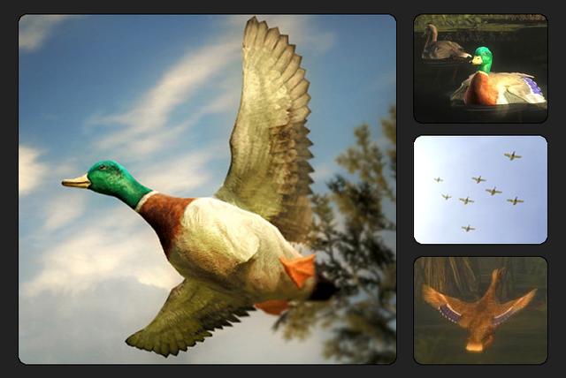 File:Species mallard duck 700.png
