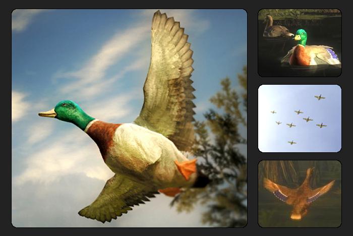 ca0feb30795e7 Mallard Duck   The Hunter Wikia   FANDOM powered by Wikia