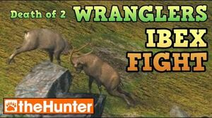 TheHunter IBEX FIGHT