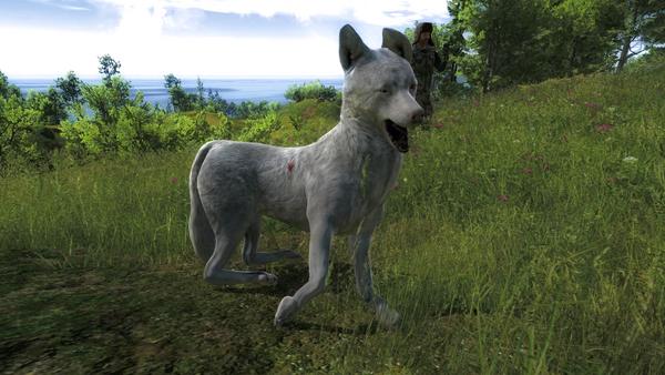 Taugor albino coyote 57