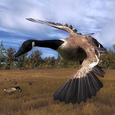 File:Canada goose air.jpg