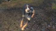 Scent hound2