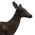 Whitetail deer female melanistic
