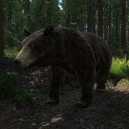 Bear chocolate