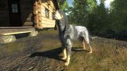 Scent hound3