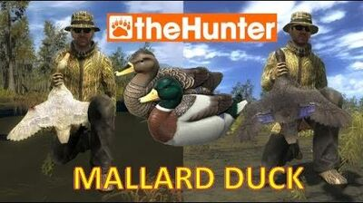 TheHunter Duck Hunting Tutorial