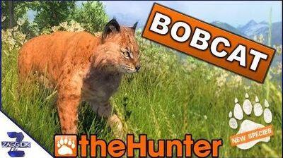 Bobcat TheHunter Classic New Animal