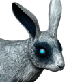 Cottontail rabbit male ghost