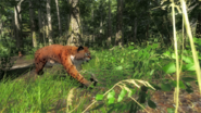 Bobcat pic 1
