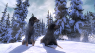 Coonhound light vs dark 3