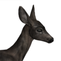 Blacktail deer female melanistic