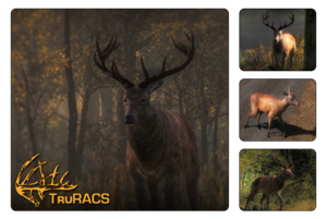 Species red deer 700