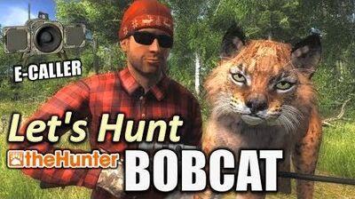 TheHunter - Let's Hunt BOBCAT