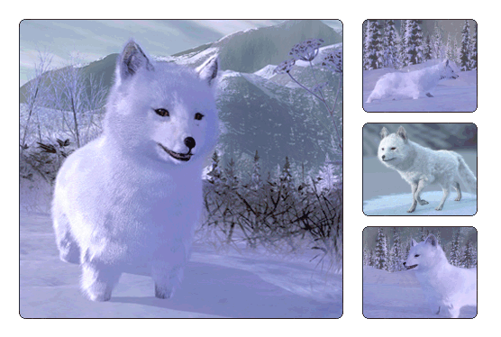 File:Species arctic fox.png