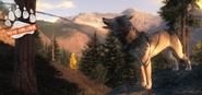 Splashscreen wolf release1