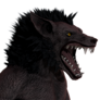 Werewolf male common
