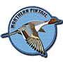 Northern pintail badge
