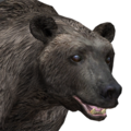 Brown bear male silvertipped v1