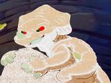 White Cera