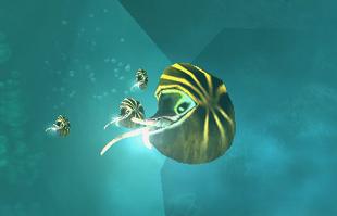 Nautilusfluoreusprofile