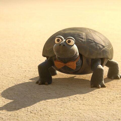 File:Marcel (turtle).jpg