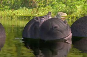 File:JungleBunch Hippo.jpg