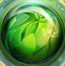 Círculo verde