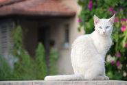 White Cat. ==