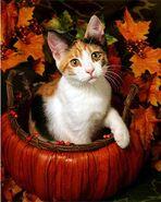 Calico Fall Kitty Cat