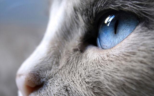 File:Beautiful cat.jpg