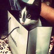 Rich cats of instagram rabbit38 20120913 1