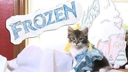 Disney's Frozen (Cute Kitten Version)