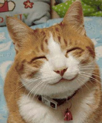 File:Happy cat.jpg