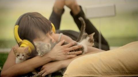Kitten Therapy The Prescription for Stress