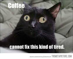 File:Black Cat meme.jpg