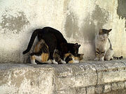 220px-Cats having sex in Israel