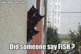 File:Cat meme b.jpg