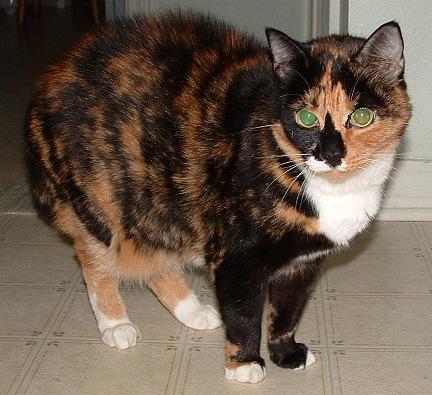 File:Bell-the-cat.jpg
