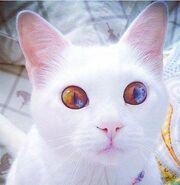 KITTY! 3