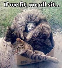 File:Cat fit sit.jpg