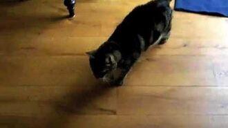 "Cat Playing ""I Spy"""