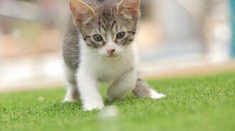 1 Virtual KittenTherapy OMG Kitten Cuteness